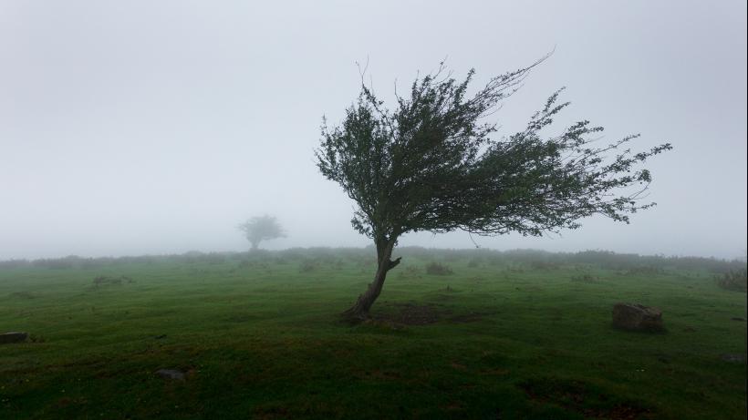 Hoor De Wind Waait Door De Bomen Sgo Grolloo